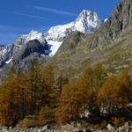 Tour du mont Blanc Nord - 7 jours - descente vers trient