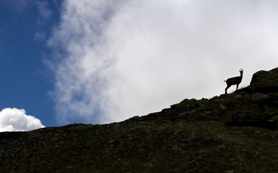La faune et les animaux sur le Tour du Mont Blanc
