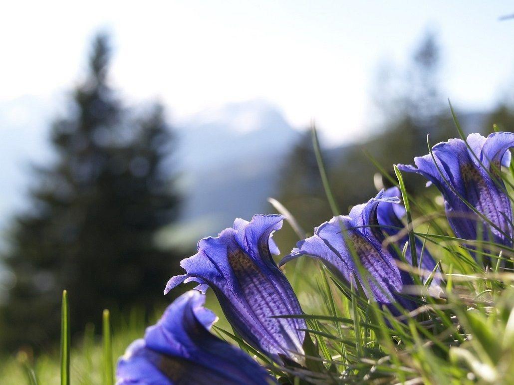 Fleurs sur le TMB